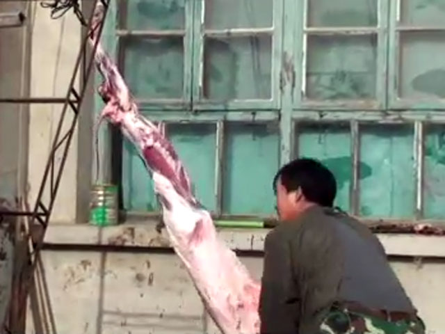 Animals skinned alive for Fur Trade